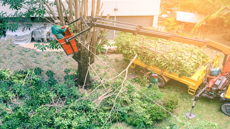Three Reasons to Hire a Professional to Perform Landscaping Maintenance Service in Anaheim