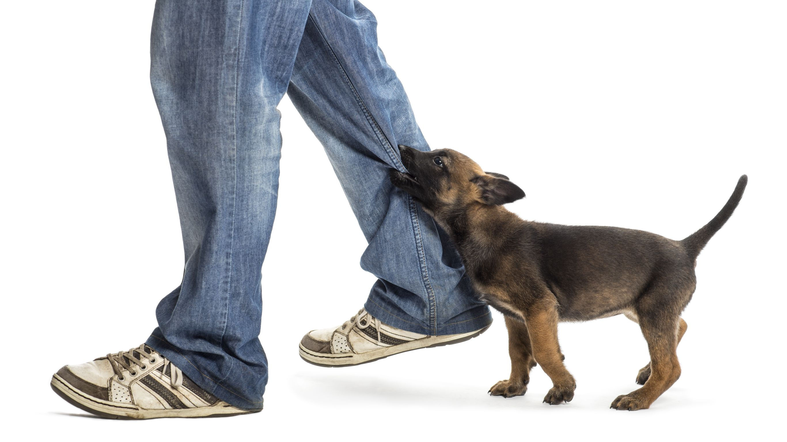 Starting A Dog Bite Case With Personal Injury Lawyers In Bradenton, FL