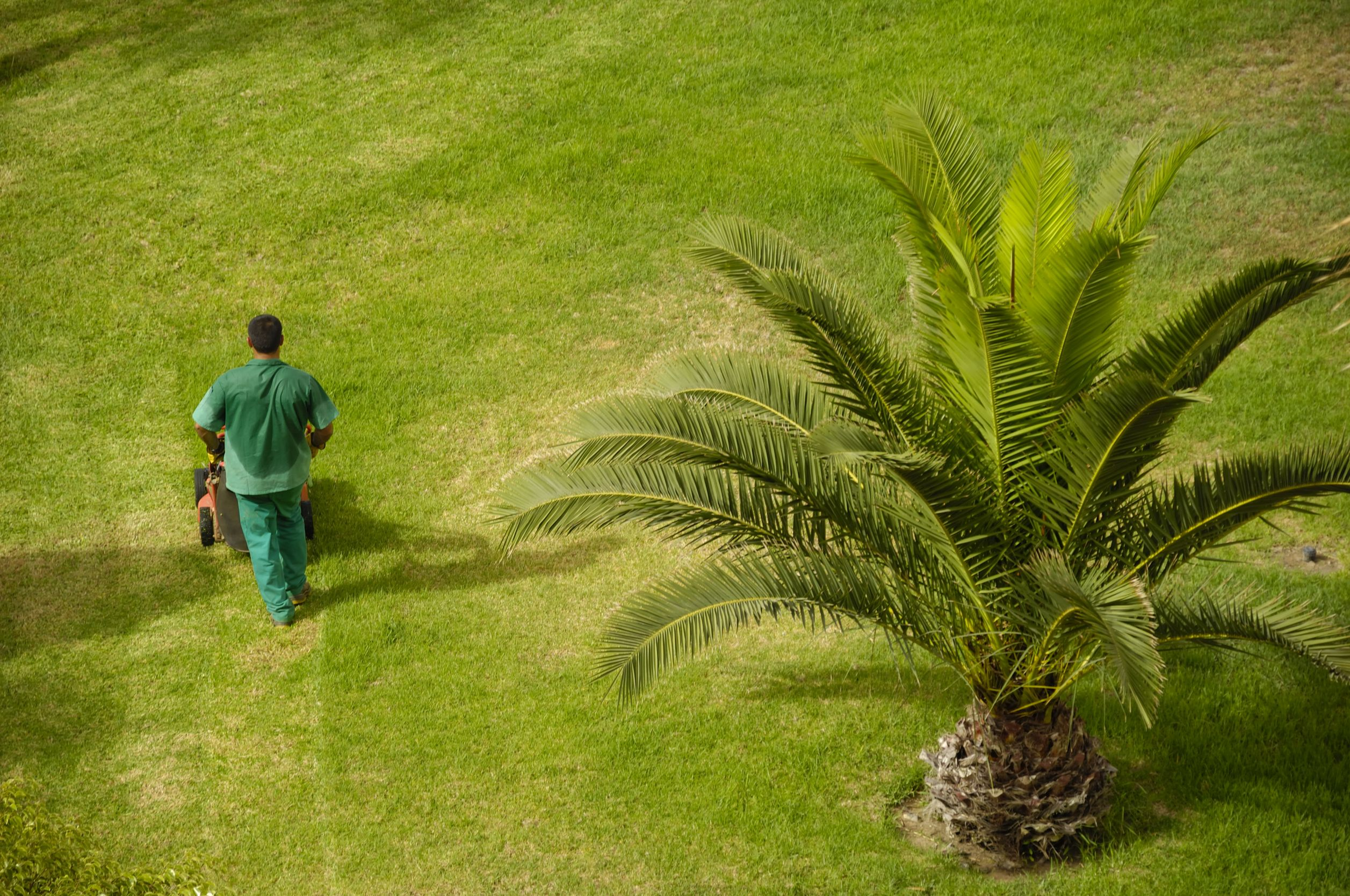 How to Find the Right Lawn Services Pro