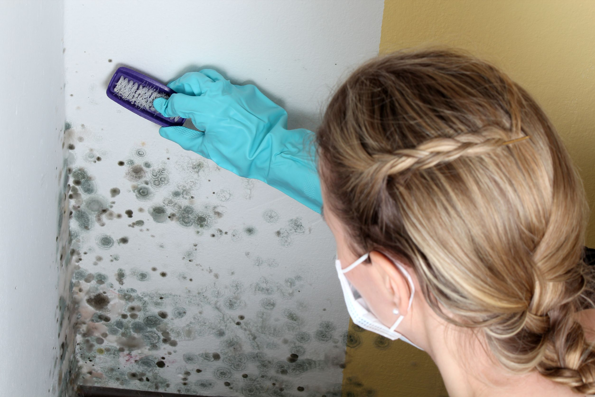 Tips for Ridding Your Home of Mold With St. Clair Remediation