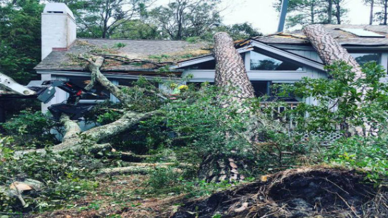 Why to Pursue Home Tree Removal and Stump grinding Peachtree City GA